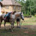 Jezdecká dílna II. pro jezdce začátečníky
