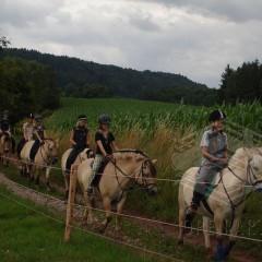 Jezdecká dílna pro mírně pokročilé jezdce I.